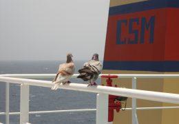 Cape Ray (21)
